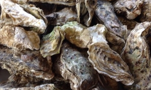 行かないと損する殻付き牡蠣食べ放題!三重の牡蠣小屋おすすめランキング