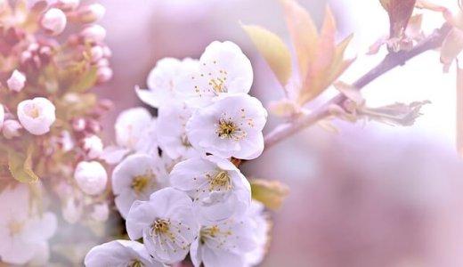 名古屋・愛知のお花見オススメランキング【2019】デートや家族で行きたい