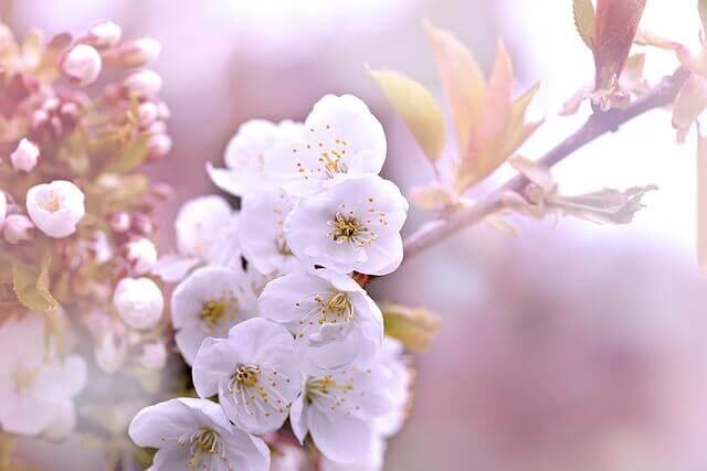 花見ランキング