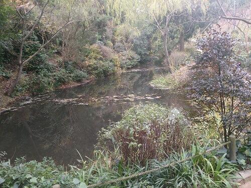 monet's pond6