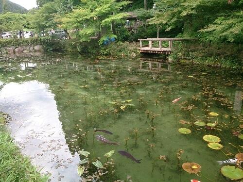 monet's pond2